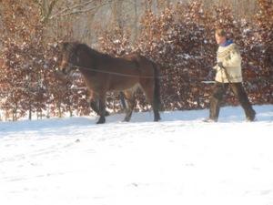 Rob begint altijd met een paard aan de lange lijnen.
