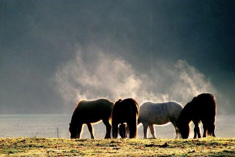 Andvari,Ast,Hrim en Digur ,foto genomen door Gert Ruijer