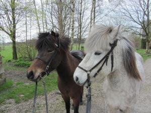 Hrim en Sola Drenthe 004