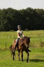 een paard wordt nageeflijk op een stille,rustige hand
