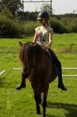 een nageeflijk paard,ziet jou als vriend en vriendelijke leider